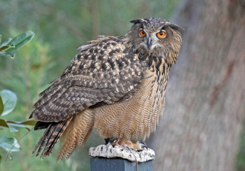 The mythical, wise, and dangerous owl