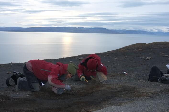 Nille (t.v.) og Julie setter i gang med å børste fram skjelettet av den nye fiskeøgla Nillefanten. Foto: Jørn Hurum