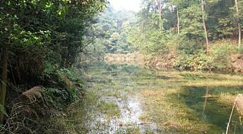 Store klimagassutslipp fra kinesiske skoger