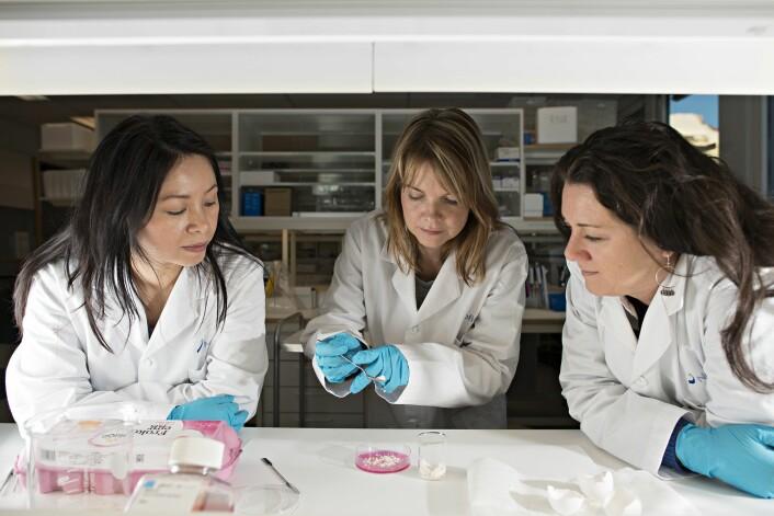 Nofima-forskerne Tram Thu Vuong (til venstre), Mona E. Pedersen og Sissel Rønning. (Foto: Jon-Are Berg-Jacobsen)