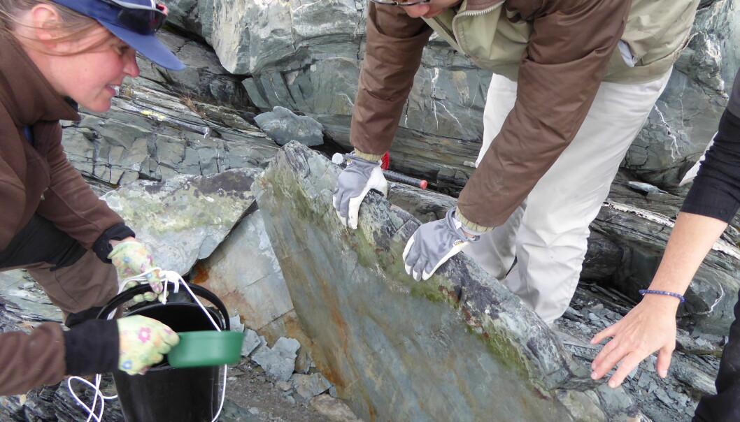 Det var et stort øyeblikk for paleontolog Anette Högström og kollegene da de oppdaget det eldgamle fossilet i Finnmark i fjor sommer. (Foto: Magne Høyberget)