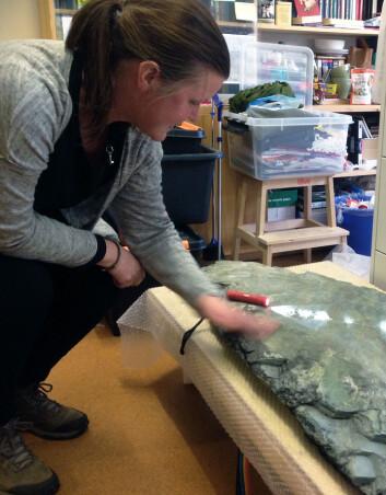 Paleontolog Anette Högström har et stykke havbunn liggende på kontoret. Slik kan hun studere det ubestemmelige fossilet hver dag. (Foto: Ida Kvittingen, forskning.no)