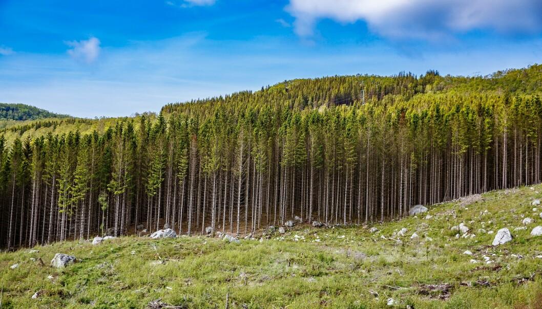 – Økt urbanisering vil gjøre at byråkrati og tømmerkjøpere vil måtte finne nye måter å nå skogeierne på og få dem til å ville selge tømmer, sier skogforsker Hanne K. Sjølie.  (Foto: Colourbox)