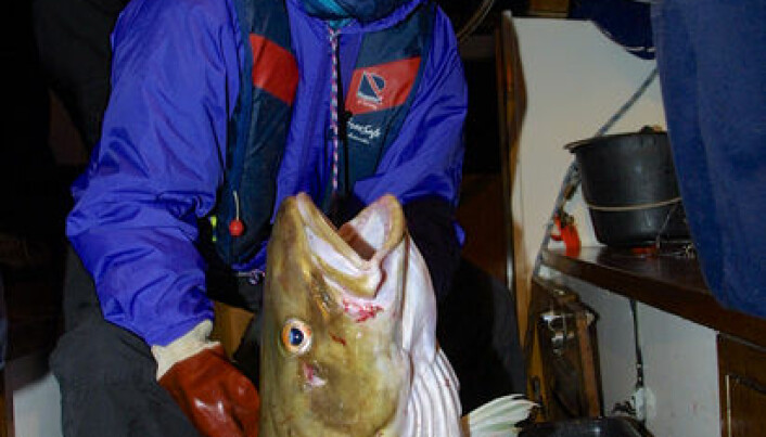 Fishing tourists release small cod