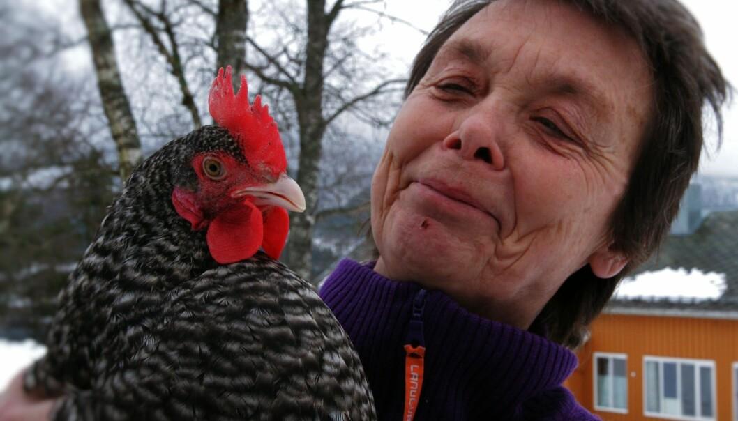 Forsker og veterinær Kristin Sørheim ved NORSØK, Norske senter for økologisk landbruk mener bruk av narasin i kyllingproduksjon lenge har vært et feilspor. (Foto: Anita Land)