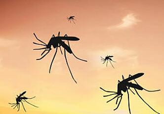 Proteins in the brain protect against cerebral malaria