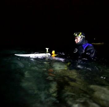 Utsetting av undervannsrobot i Kongsfjorden på Svalbard for å studere plante- og dyreliv i januar. (Foto: Geir Johnsen, NTNU/UNIS)