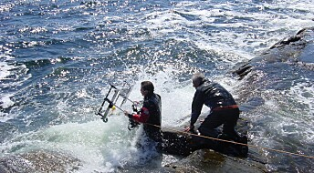 Overgjødsling og varmere vann kan bety trøbbel i Skagerrak