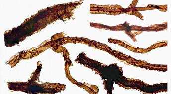 Tidligste fossil av liv på land