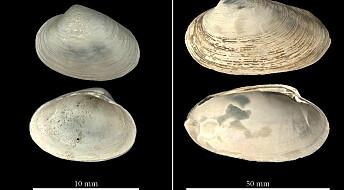 Muslinger avslørte tusen år av metanutslipp