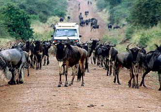 Serengeti road divides biologists