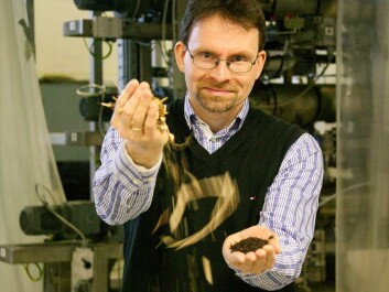 A project led by senior scientist Øyvind Skreiberg is transforming the chopped-off branches and tops of felled spruce trees into a fine powder that is then pressed into high-energy pellets. (Photo: SINTEF / Gry Karin Stimo)