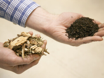 Torrefaction concentrates the energy content of biofuels. Left: chopped-up branches and tops. Right: this type of raw material has been subjected to torrefaction before being ground into a fine-grained mass, which is then pressed into pellets. This contains about 70 per cent of the original mass, while keeping 90 per cent of its energy. (Photo: SINTEF / Gry Karin Stimo)