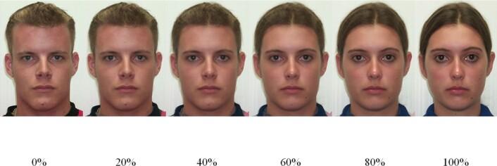Dette var ansiktene deltakerne skulle vurdere. Bildet ytterst til venstre er av en mann og bildet ytterst til høyre er av en kvinne. Alle bildene i midten er manipulerte varianter med varierende grad av maskuline og feminine trekk. (Foto: Plos One)