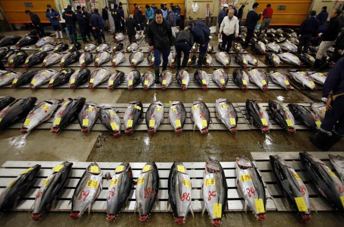 Fisk er en viktig del av det japanske kjøkkenet. Dette er tunfisk-markedet for grossister i Tokyo. (Foto: Toru Hanai/Reuters/NTB Scanpix)