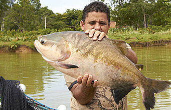 Fish farming in the Amazon