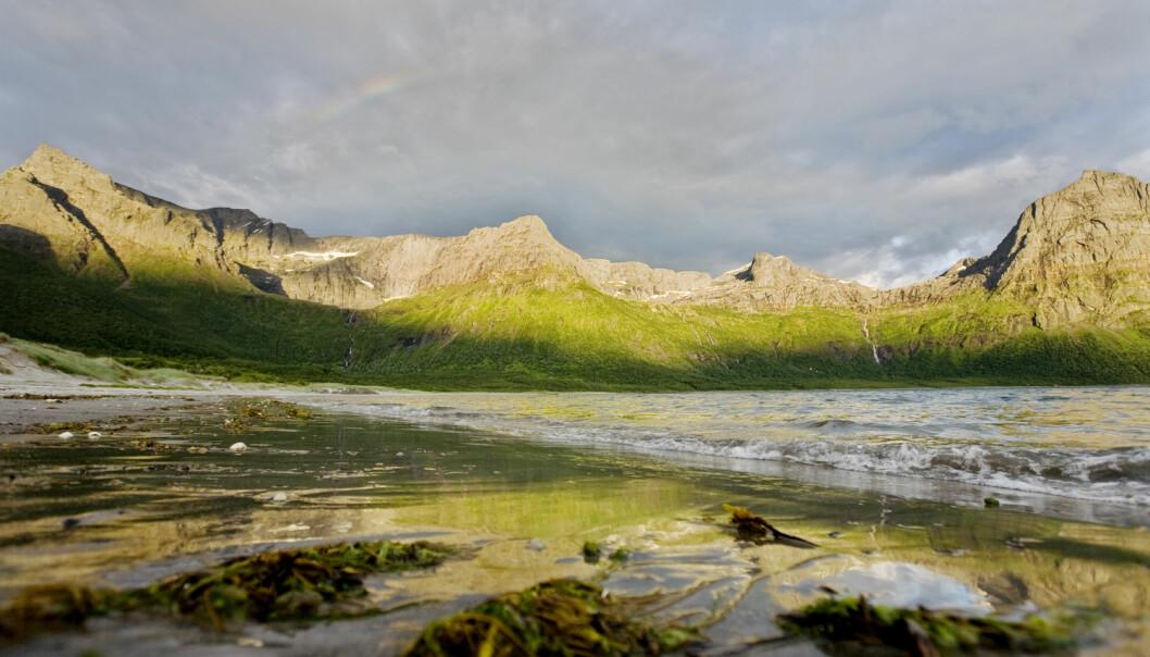 Kunnskap var avgjørende for at Norge ble en oljenasjon. Da som nå vil forskning, utvikling og næringslivssamarbeid være avgjørende for overgangen til bioøkonomi, skriver Margareth Øverland. Bildet er fra Brennviksanden i Steigen kommune i Nordland. (Foto: Scanpix)