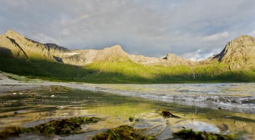 Forskeren forteller: Store alger gir ny næring