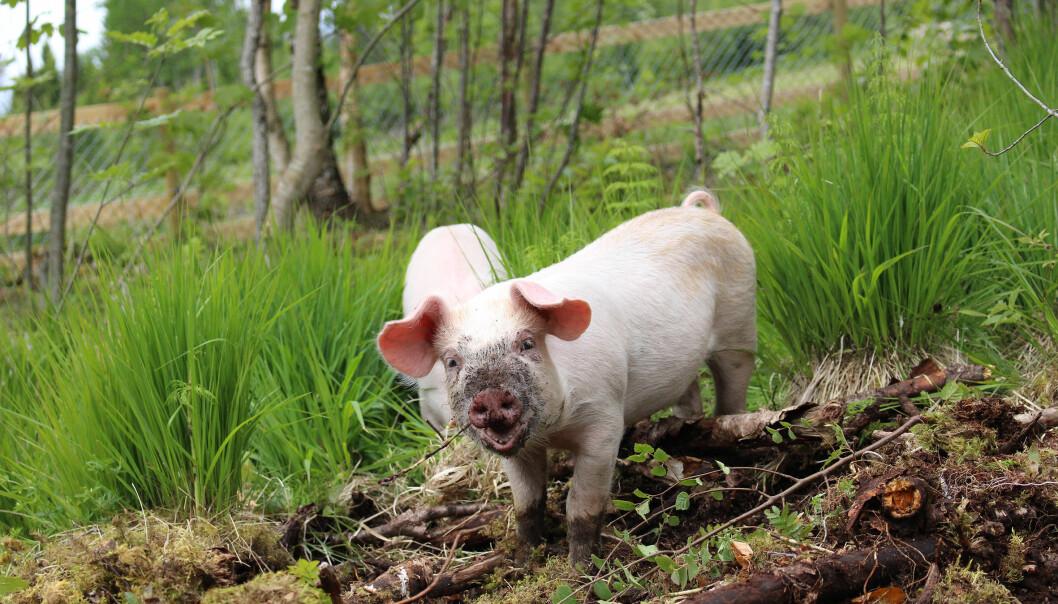 Hvorfor så mye motstand mot økologisk landbruk?