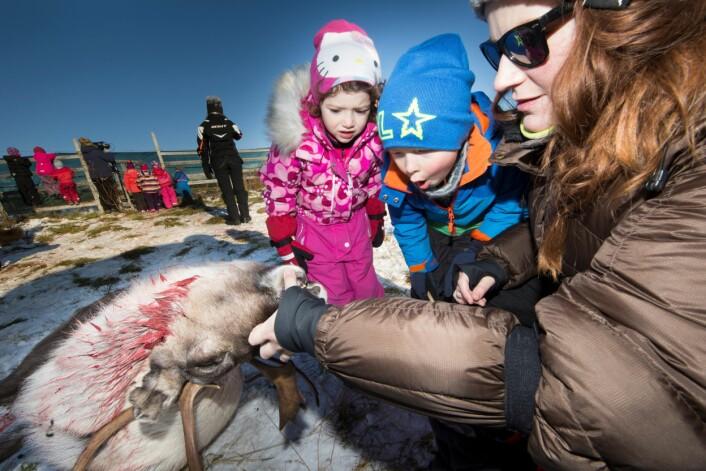 Pedagogisk leder ved Kaisguru barnehage, Christina Pedersen, tar med barnehagebarn for å oppleve tradisjonell reinslakt. (Foto: Stig Brøndbo)