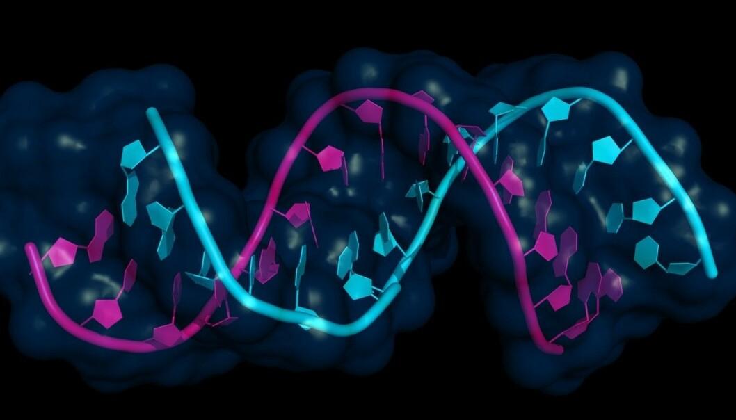 Mikro-RNA (rosa) bundet til mRNA. (Illustrasjon: Shutterstock/NTB scanpix)