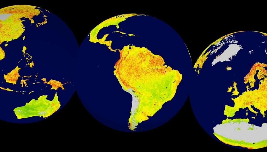 Røde områder er økosystemer med høy følsomhet, mens grønn indikerer lavere følsomhet. Grått er ufruktbart eller islagt land. (Illustrasjon: Alistair Seddon)
