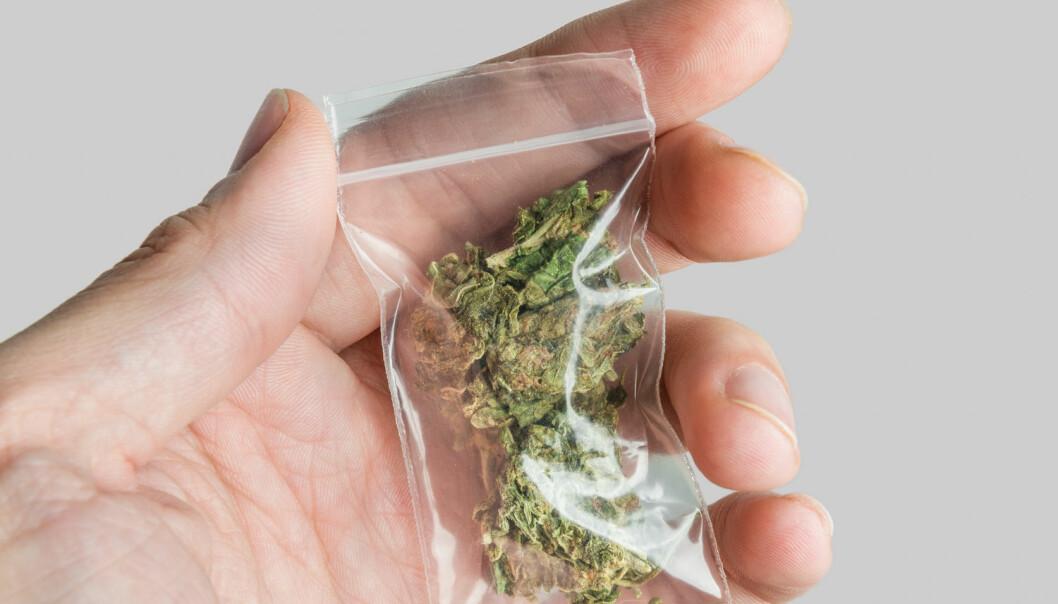 En amerikansk forskergruppe har prøvd å undersøke hvordan hjernene til unge marihuana-brukere utvikler seg. (Foto: Shutterstock, NTB scanpix)