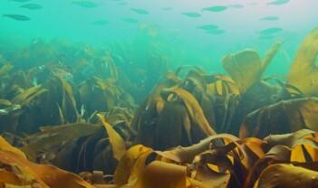 Kartlegging av natur etter NiN – men ikke marin?