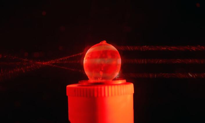 Eksempel på bestemmelse av fokuspunktet hos håkjerring. Øyelinsen gjennomlyses med en laser på fem ulike punkter (her er bare vist tre) og krysningspunktet angir det indre fokuspunktet. (Foto: Inaki R. T. Roca)