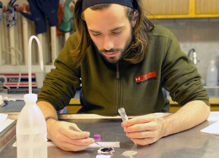 Masterstudent Inaki R. T. Roca laver sitt prosjekt om synet til håkjerring. Her har han dissekert et håkjerring øye. (Foto: Kim Præbel)
