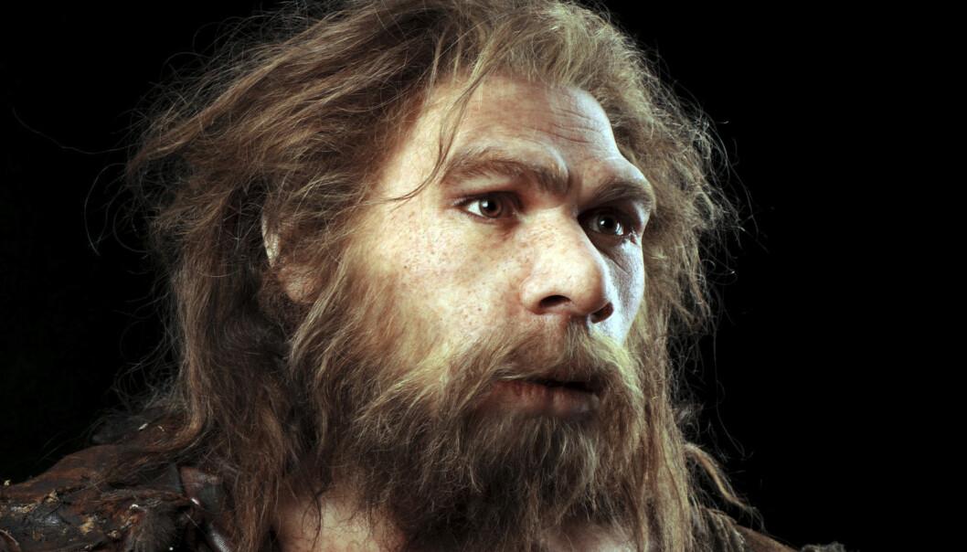 Rekonstruksjon av en neandertalsk mann som skal ha levd i Frankrike. Neandertalerne skal ha kommet til Europa for mer enn 200 000 år siden, og det er kanskje ikke mer enn 30 000-40 000 år siden de døde ut. (Foto: Science Photo Library/NTB Scanpix)