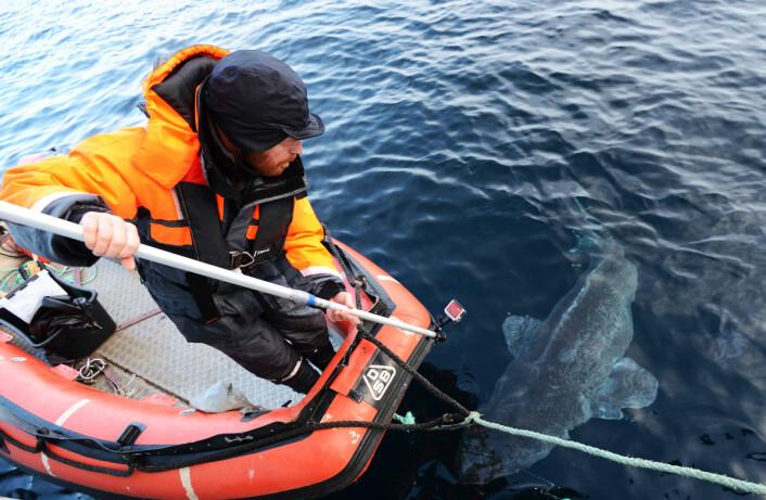 Håkjerringen filmes og det tas bilder over og under vann. Her er Kim Præbel ute i gummibåten for å ta undervannsbilder.  (Foto: Julius Nielsen)