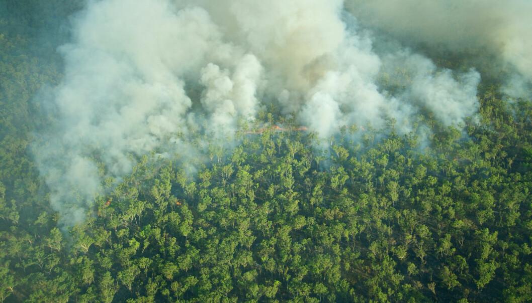 En skogbrann i Kakadu-nasjonalparken i Australia. Mange mener det vil bli flere og flere skogbranner i Australia etterhvert som klimaendringene blir større. (Foto: Shutterstock/NTB Scanpix)