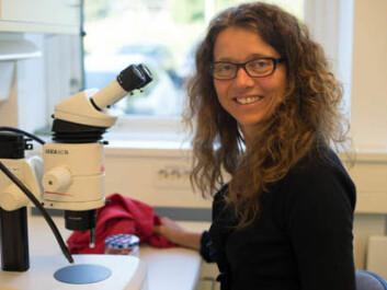 Ingeborg Klingen head of Section of Invertebrate Pests at Bioforsk Plant Health and Plant Protection Division. (Photo: Anette Tjomsland, Bioforsk)