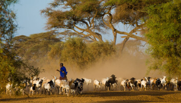 I Tanzania risikerer hundtretusener av bønder å miste levebrødet sitt som følge av grønn økonomisk vekst. (Foto: Andrzej Kubik / Shutterstock / NTB scanpix)