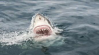 Haien kan hjelpe de med dårlige tenner