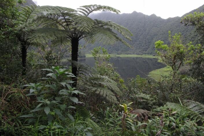 Et av voksestedene for <em>Gibbosporina</em>, et dalsøkk med 12 000 millimeter regn i året på den franske øya Rèunion nær Madagaskar. (Foto: Arve Elvebakk)