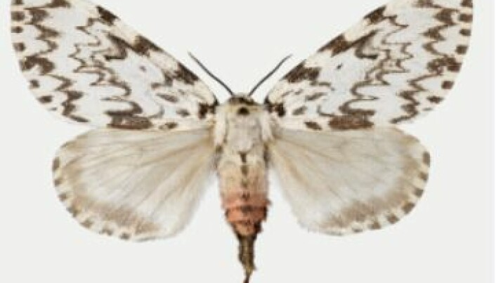 The climate profiteers of the insect world