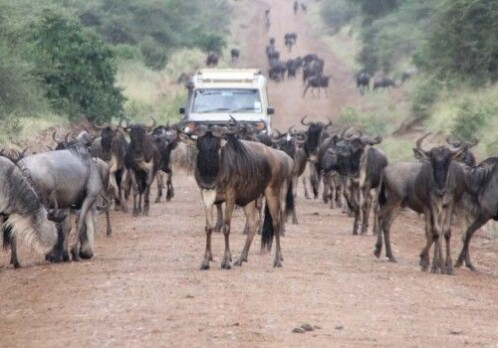 Tanzanian parks need bigger buffers