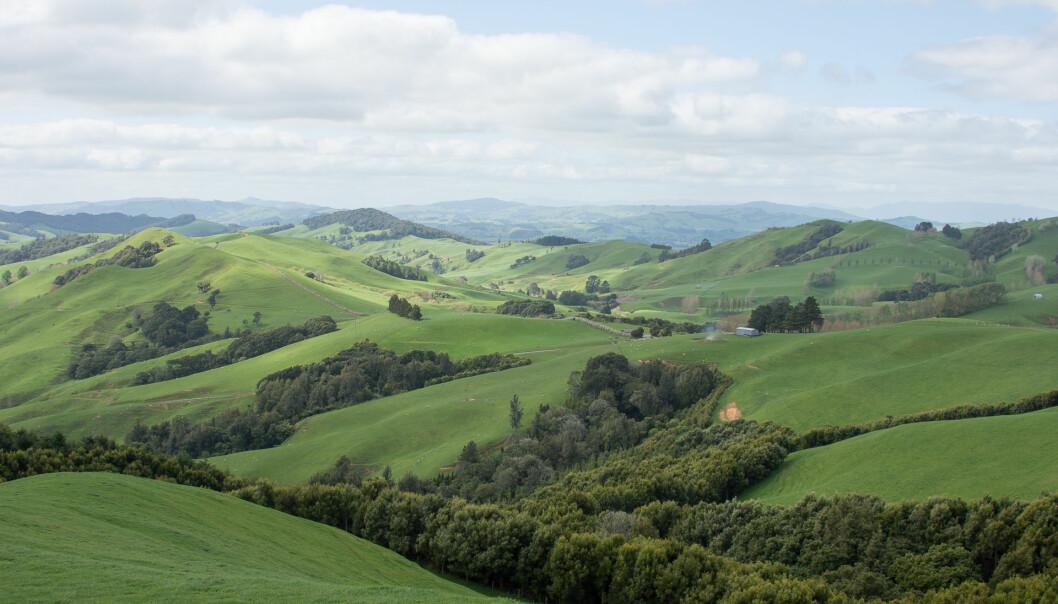 Bølgende jordbrukslandskap er karakteristisk for Waikato på North Island, New Zealand. (Foto: Morten Günther)