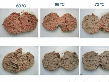 When meat has been packed in an oxygen-rich atmosphere, it becomes brownish grey and looks cooked through when it reaches 60°C, while meat packed with more traditional gas mixtures or in a vacuum needs temperatures above 71°C to achieve the same colour. (Photo: Nofima)