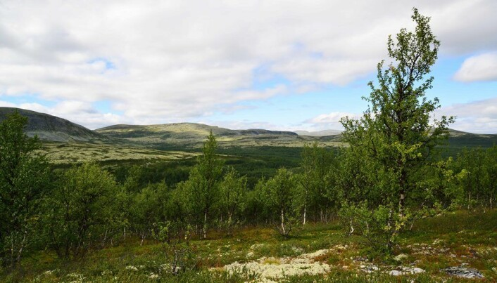 Expanding mountain forest promotes climate warming