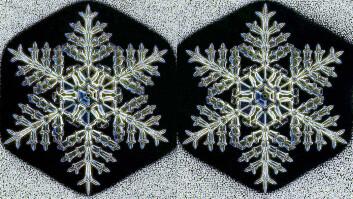 Hvis du ser nøye etter, kan du kanskje se at disse tvilling-snøkrystallene ikke er hundre prosent like. Men forskjellene er små.  (Foto: Kenneth Libbrecht)