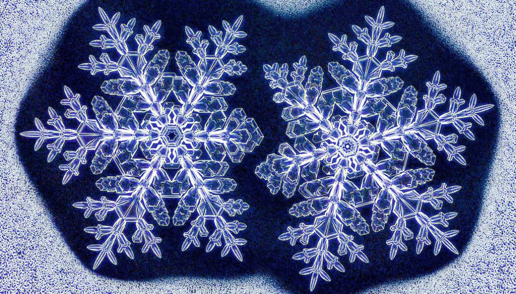 En del av barnelærdommen må justeres etter at fysikeren Kenneth Libbrecht ved California Institute of Technology klarte å skape identiske tvilling-snøkrystall.  (Foto: Kenneth Libbrecht)