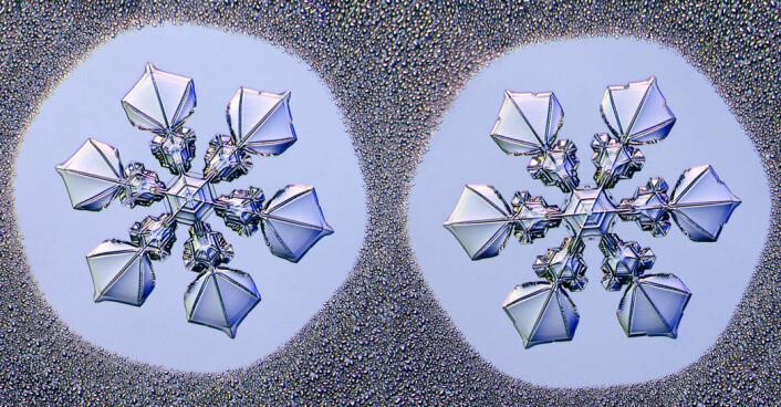 Enda et eksempel på to identiske tvilling-snøflak. Bildene er tatt med et spesiallaget kamera-mikroskop. (Foto: Kenneth Libbrecht)