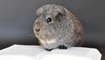 Utnytting av dyr, uavhengig av om vi utnytter dem for pelsen, kjøttet eller melken, eller i medisinsk forskning, er til syvende og sist et spørsmål om etikk, skriver Mieke Louwe.  (Foto fra Pixabay, Public Domain)