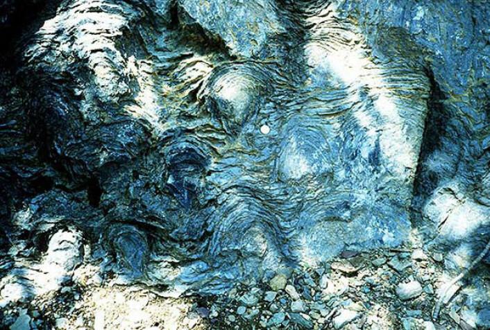 Slik startet det: Cyanobakteriene i urhavet dannet lag på lag av slim, biofilm. Denne ble forsteinet til stromatolitter. Denne stromatolitten er rundt en millard år gammel og er fra Siyeh-formasjonen i Glacier National Park i Montana i USA. (Foto: National Park Service)