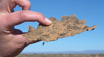 Bakterier lager solfaktor i ørkenen
