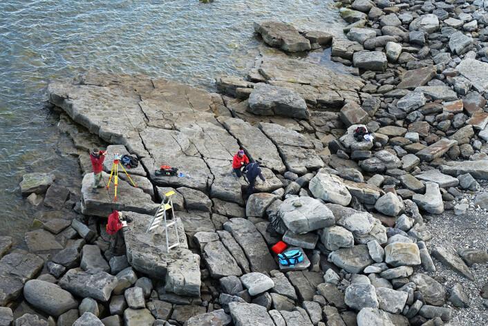 Forskere fra Naturhistorisk museum i Oslo, UNIS på Svalbard og University of Alaska Fairbanks kartlegger fotsporene på Boltodden i 2014. (Foto: Hans Arne Nakrem, Naturhistorisk museum, Universitetet i Oslo.)