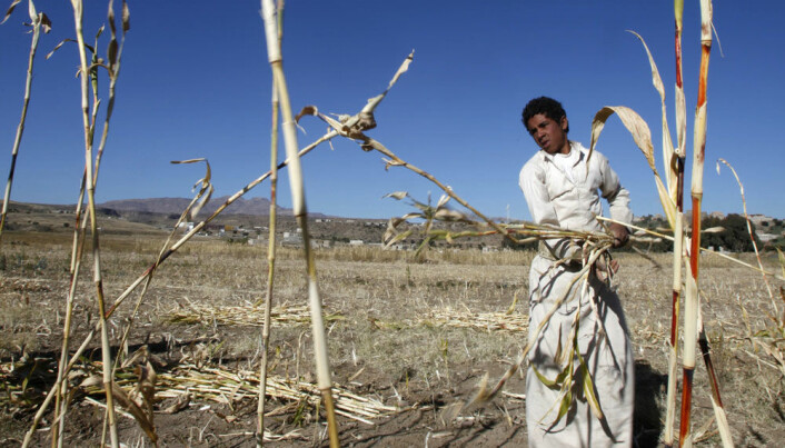 Food security hinges on climate adaptation